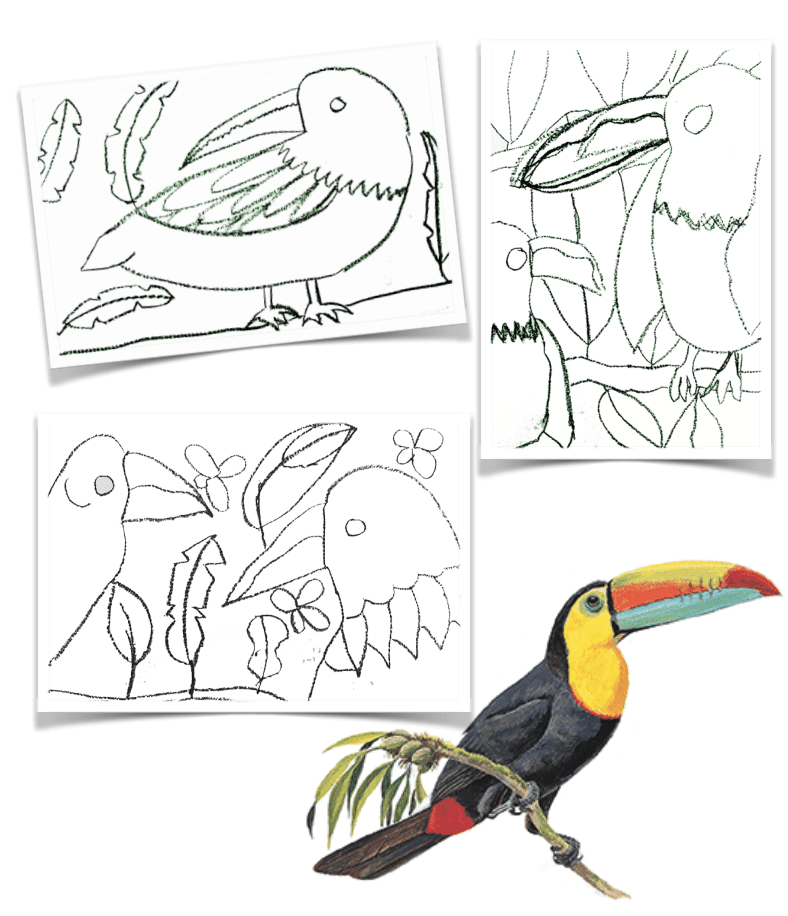 How to Draw A Toucan Art Project