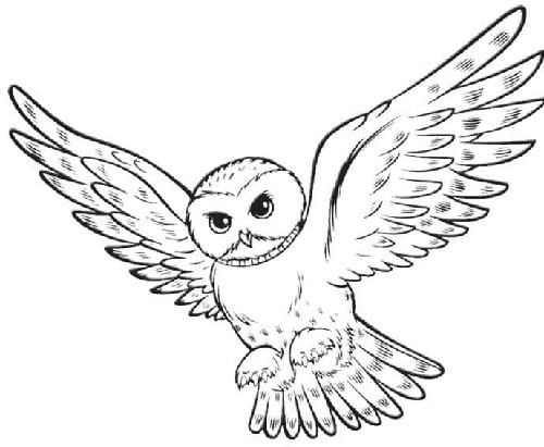 Snowy White Owl Drawing Snowy-owl-hedwig