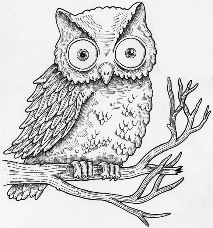 Drawing Of An Owl Owllargerjpg