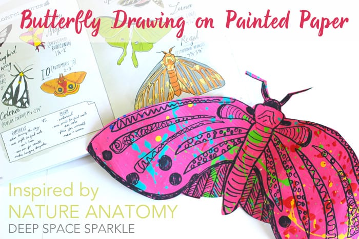 Butterfly drawing project inspired by Julia Rothman's Nature Anatomy