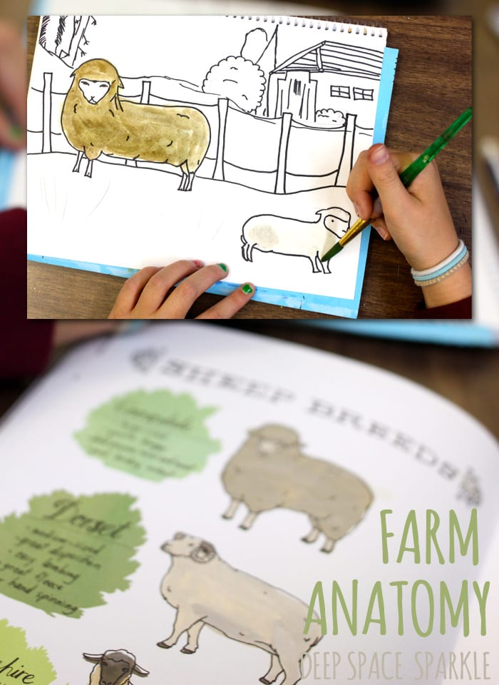 Farm Anatomy by Julia Rothmans. Art projects for kids inspired by the book