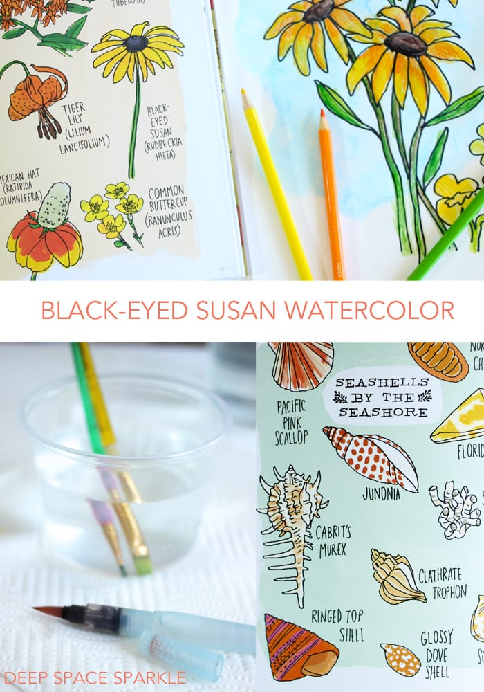 Black-eye susan watercolor project inspired by Julia Rothman's Nature Anatomy