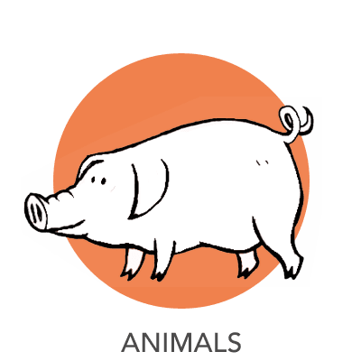 animal-drawing
