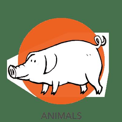 animal-drawing