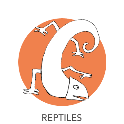 reptiles-drawing