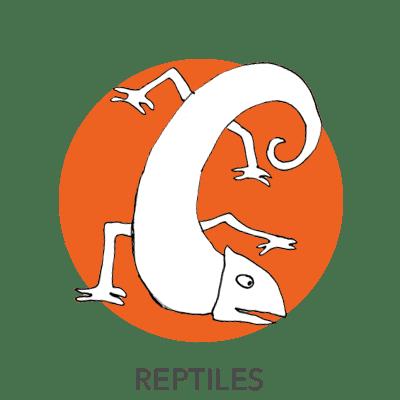 reptiles-drawing